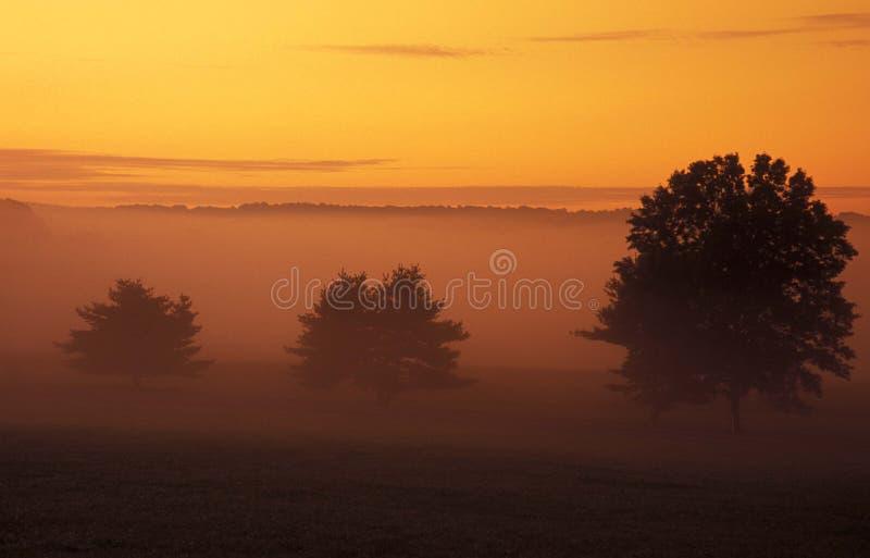 Trees and sunrise. Misty sunrise, Valley Forge National Park, Pa stock photo
