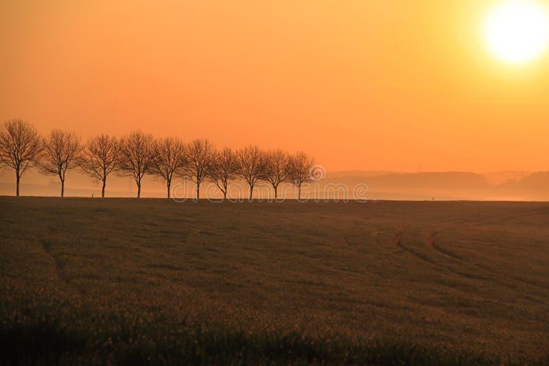 Trees, Sunrise, and Mist royalty free stock photos