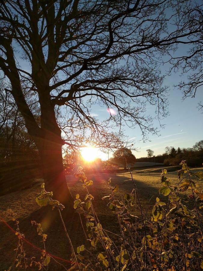 Trees at sunrise stock photo