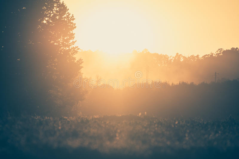 Trees in sunset with fog. Blur background scene stock images