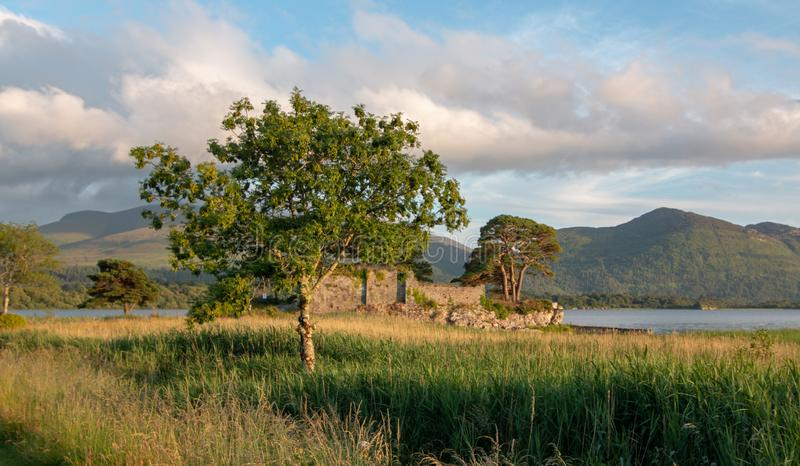 Trees at sunset at McCarthy Mor Irish castle ruins at Lough Leane on the Ring of Kerry in Killarney Ireland. IRE stock image