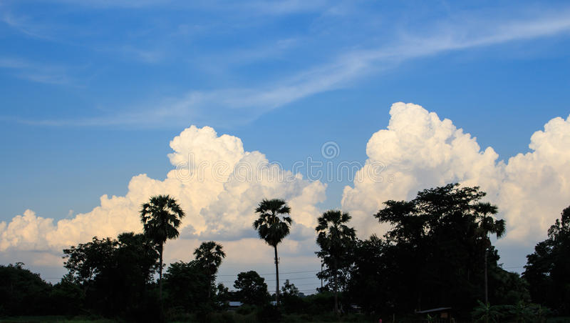 Trees on sunset sky stock photos