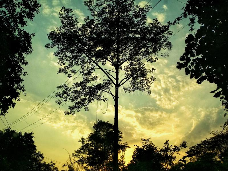Trees sunsets stock photo
