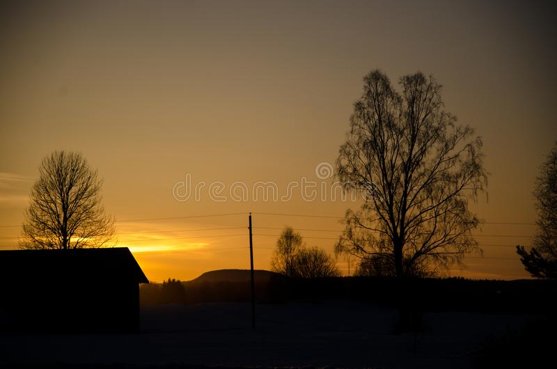 Trees in the sunsett royalty free stock photography