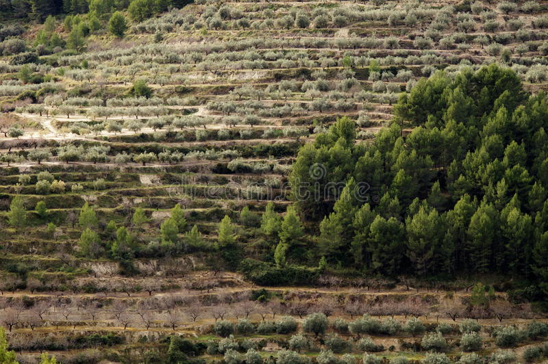Trees on terraces stock images