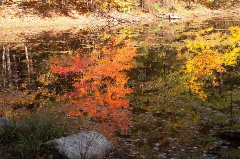 Fall foliage reflections off of a pond. stock images