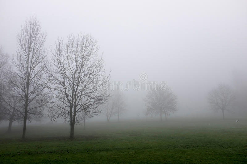 Trees in thick fog stock photos