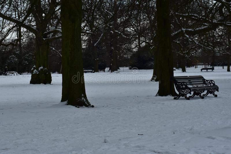 Snow covered field. Trees in a thick snow covered field stock photography