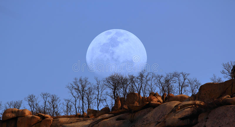 Trees On The Top Of Hill Stock Photography