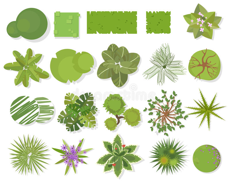Trees top view.Different trees, plants vector set for architectural or landscape design.Landscaping symbols set isolated on white. Trees top view.Different trees vector illustration