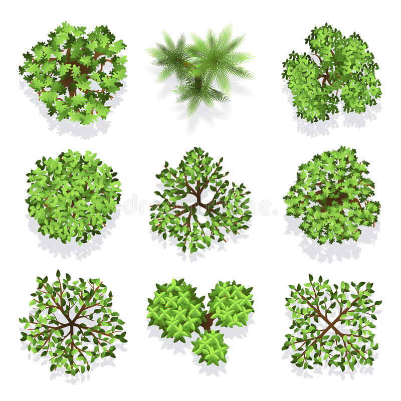 Trees top view vector set for landscape design and map. Green tree for garden, illustration trees for forest vector illustration