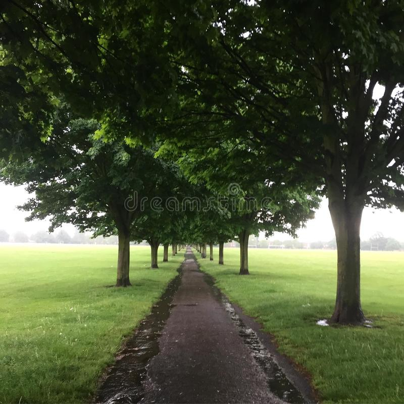 Tree walkway stock photos