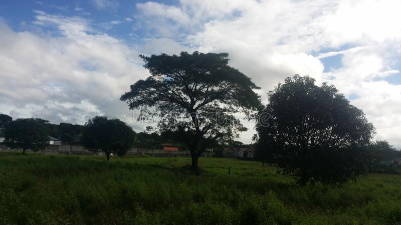 Trees royalty free stock photo