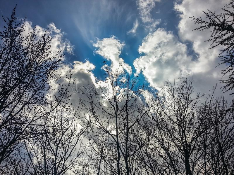 Crown trees without leaves. Clouds and sky in the background royalty free stock photos