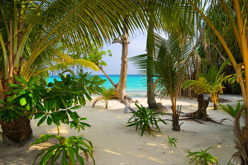 Trees on tropical beach royalty free stock image