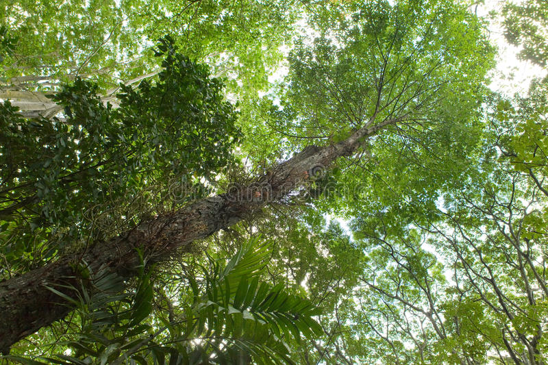 Download Trees of tropical climate stock image. Image of nature - 24684891