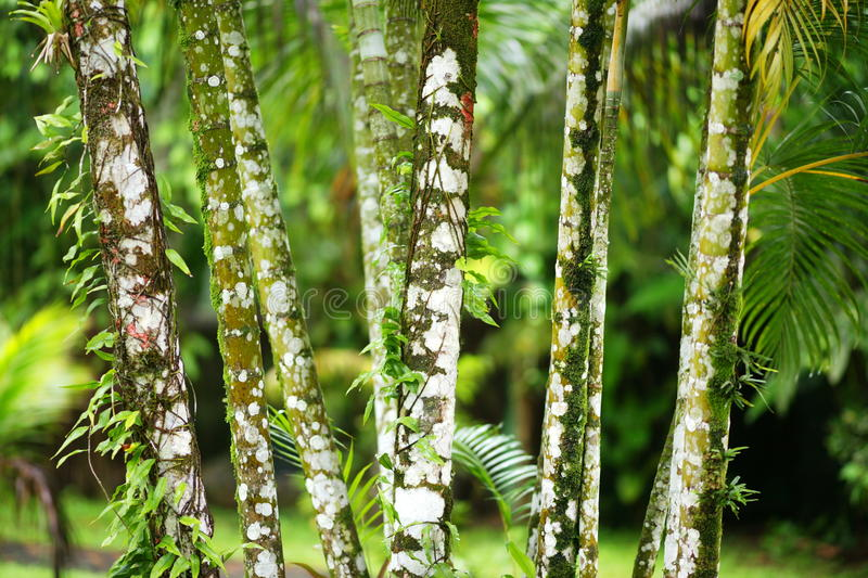Trees in the Tropics royalty free stock image