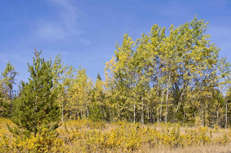 Trees turning color in the fall breeze royalty free stock photography