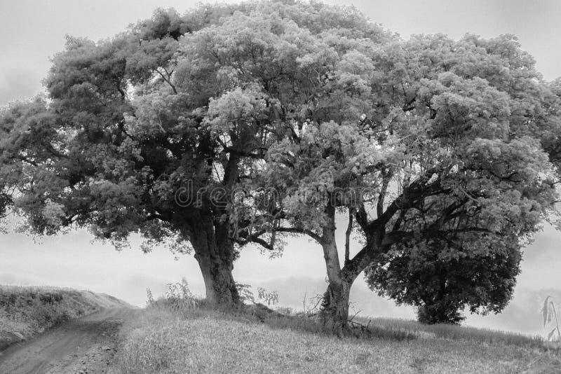 trees tv? royaltyfri foto