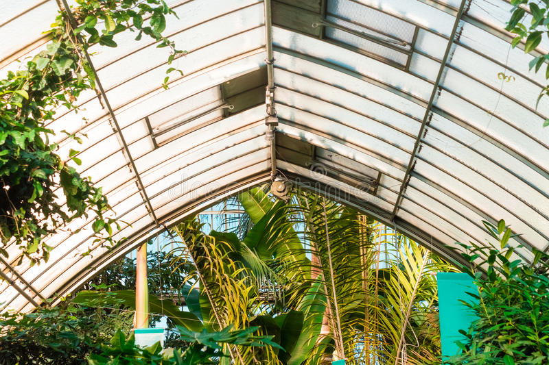 Download Trees Under Gray And White Roof Stock Image - Image of roof, plants: 82962581
