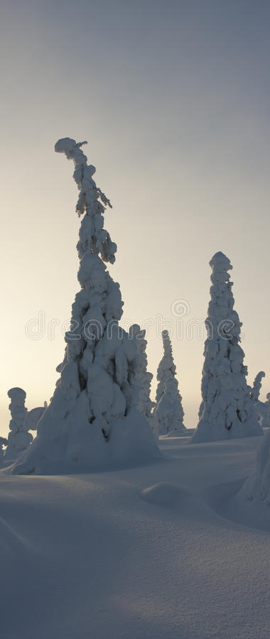 Download Trees Under Heavy Snow In Riisitunturi Stock Photo - Image: 23442408