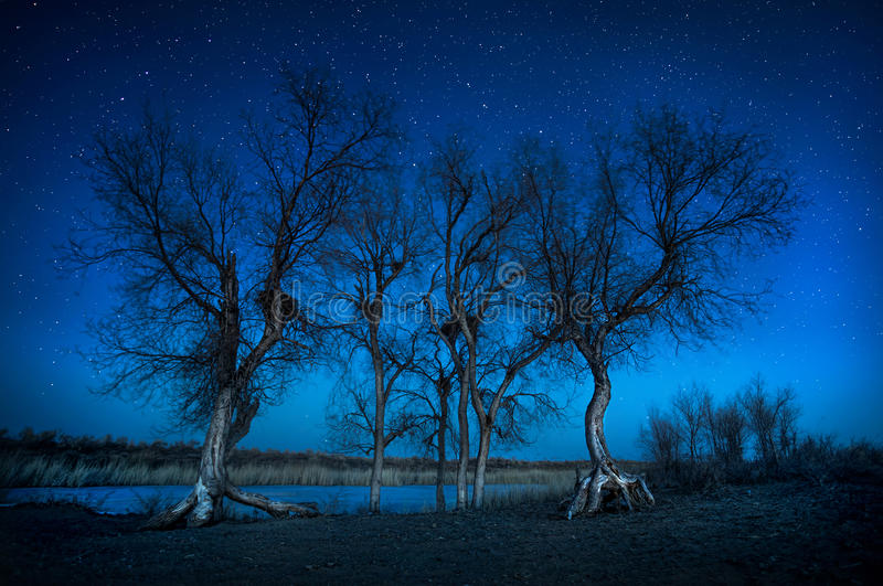 Trees under night sky in the desert. Silhouette of Turanga trees under starry night sky in the desert royalty free stock photo