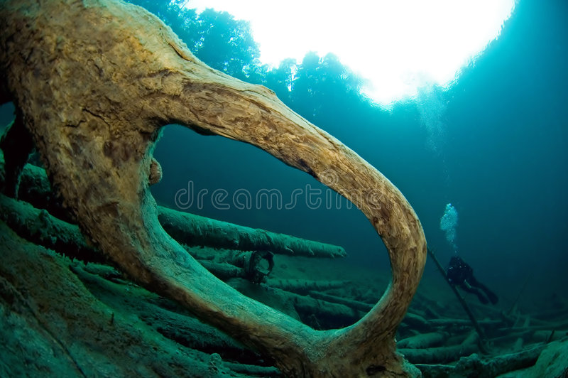Trees underwater in lake. stock image