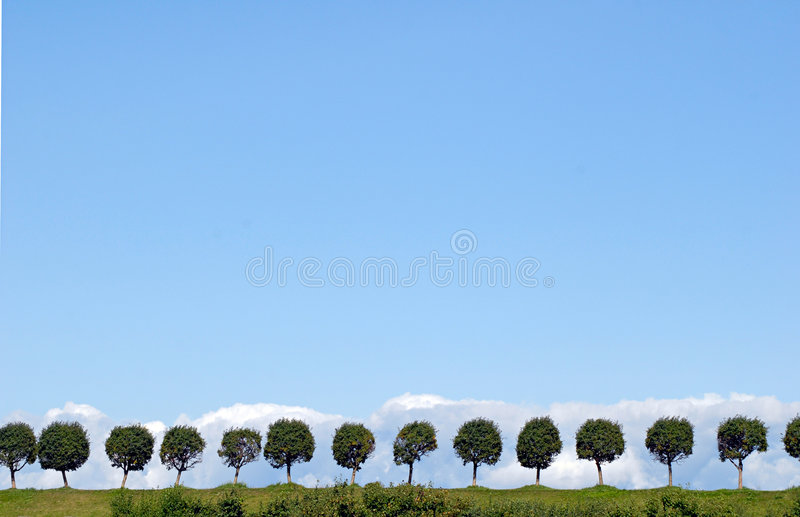Trees valley in Peterhof without people. royalty free stock image