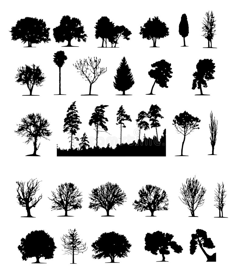 Trees (vector) stock illustration