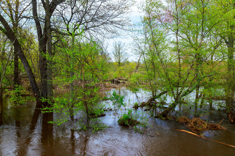 Trees walkway flooded after the rain. royalty free stock images