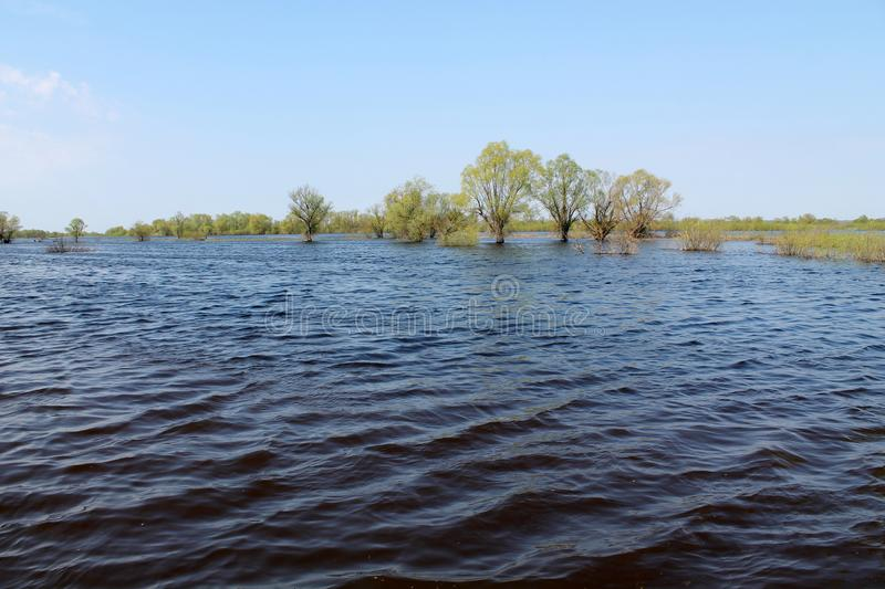 Trees in water. Landscape with spring flooding of Pripyat River near Turov, Belarus. Trees in water. Landscape with spring flooding of the Pripyat River near royalty free stock photos