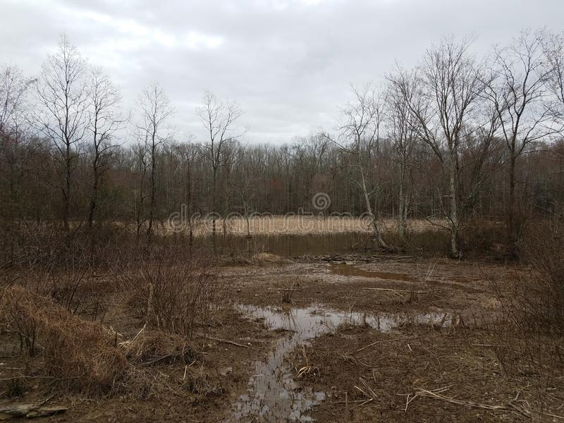 Trees and water and mud in wetland or swamp area. Trees and water and mud in wetland or swamp or marsh area stock images