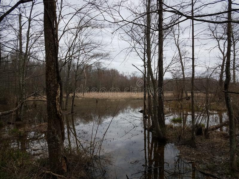Trees and water and mud in wetland or swamp area. Trees and water and mud in wetland or swamp or marsh area royalty free stock images