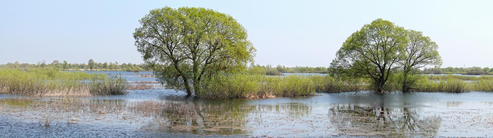 Trees in water. Panoramic landscape with spring flooding of Pripyat River near Turov, Belarus. Trees in water. Panoramic landscape with spring flooding of the stock photo