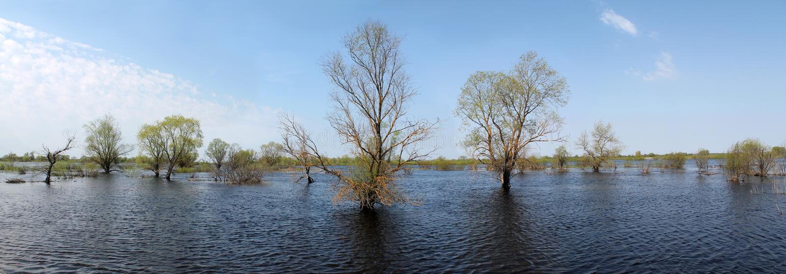 Trees in water. Panoramic landscape with spring flooding of Pripyat River near Turov, Belarus. Trees in water. Panoramic landscape with spring flooding of the royalty free stock images