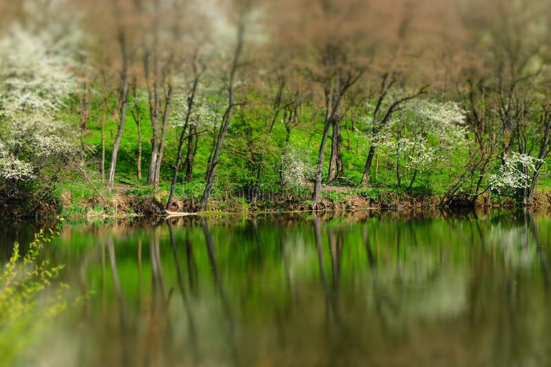 Trees and water. Reflection in the water of spring trees and grass royalty free stock image