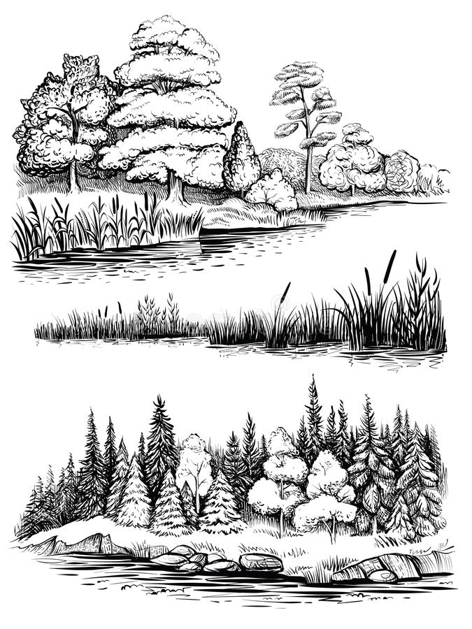 Trees and water reflection, vector illustration set. Landscape with forest, hand drawn sketch. royalty free illustration
