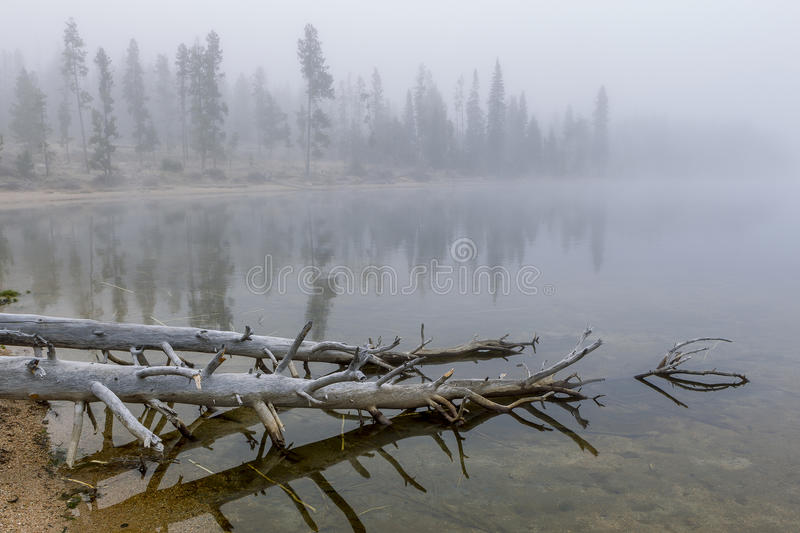 Trees in water in Stanley Lake. stock images
