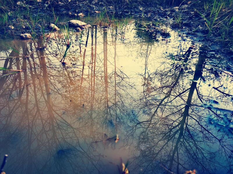 Trees in the water. Nature theme, water shiny background stock photography