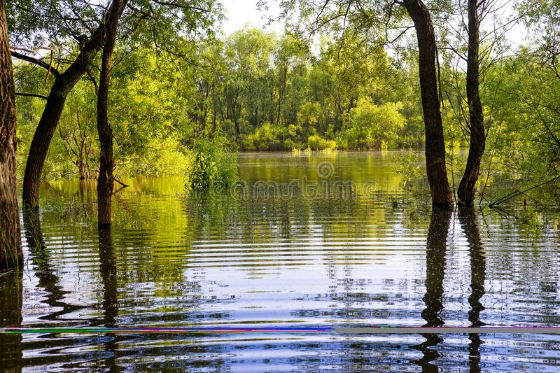 The trees and water. stock photo