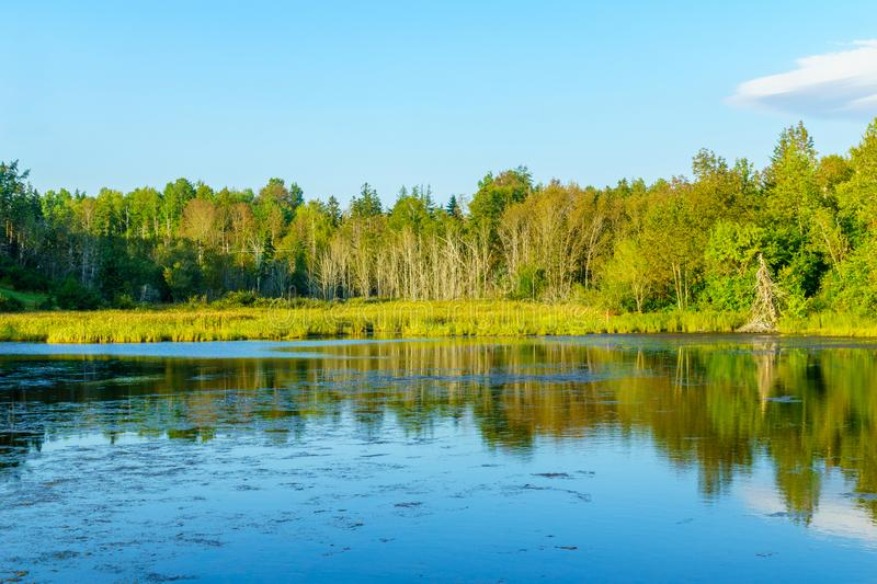 Trees and waterscape near Baddeck, Cape Breton stock photo