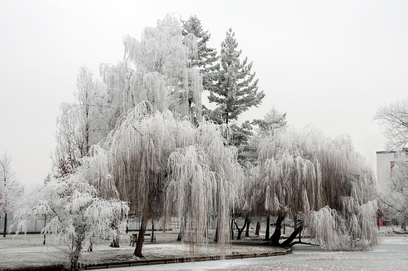 Download Trees In The White Hoarfrost Stock Photo - Image: 83713190