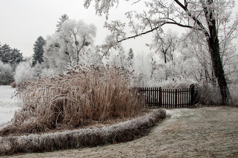 Download Trees In The White Hoarfrost Stock Photo - Image: 83713454