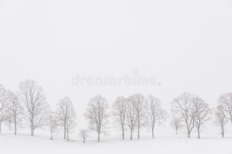 Trees in a white landscape during snowfall stock photos
