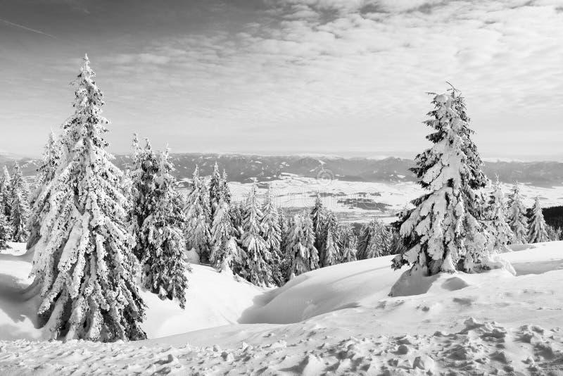 Trees in winter stock photo