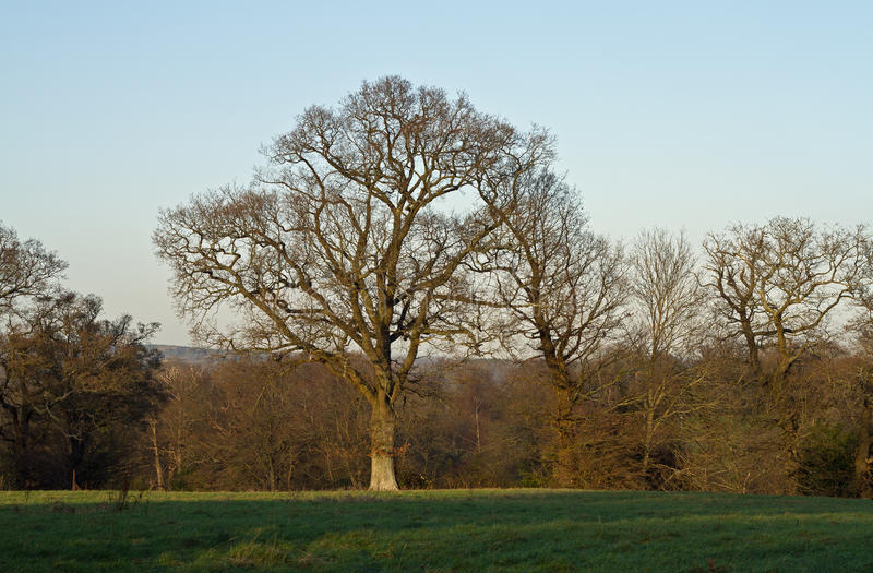 Download Trees In Winter Stock Photography - Image: 22841272
