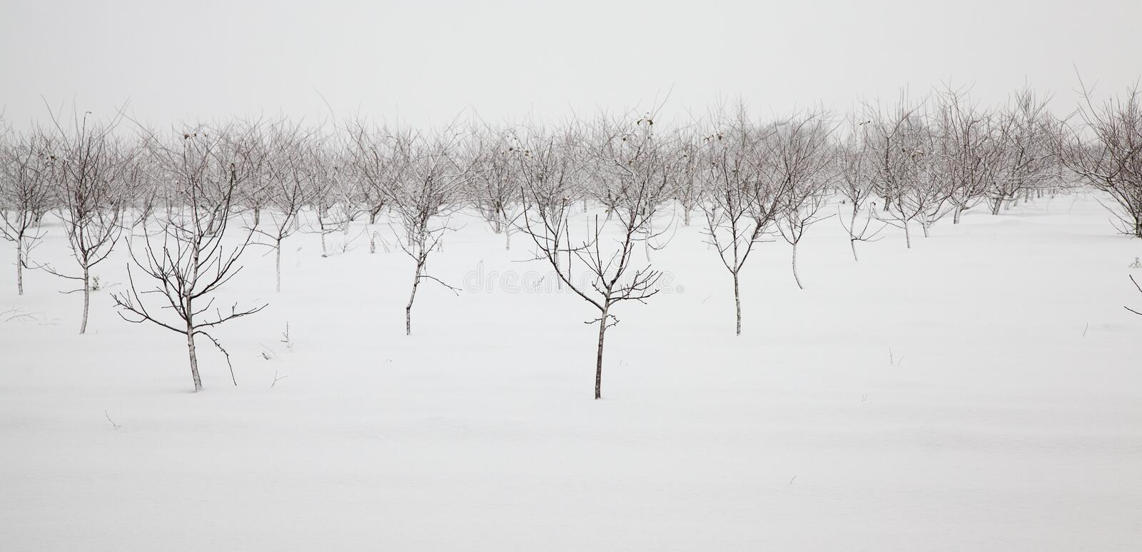 Download Trees in the winter stock photo. Image of season, edge - 23238376
