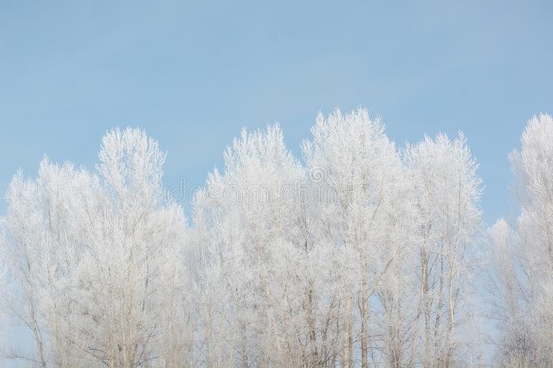 Trees in winter in winter. Beautiful winter landscape. Frost on trees in winter. royalty free stock images