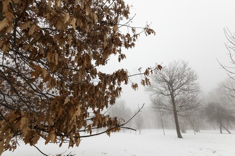 trees in winter stock photography