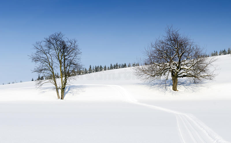 Trees in winter landscape stock photography